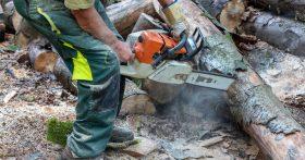 Работаю пильщиком леса, считаю мне повезло — очень хорошая зарплата, жаль здоровье уже не то