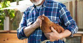 Безумная идея или бизнес? Построил курятник на даче: яиц в избытке, продаю и буду расширяться – история пенсионера