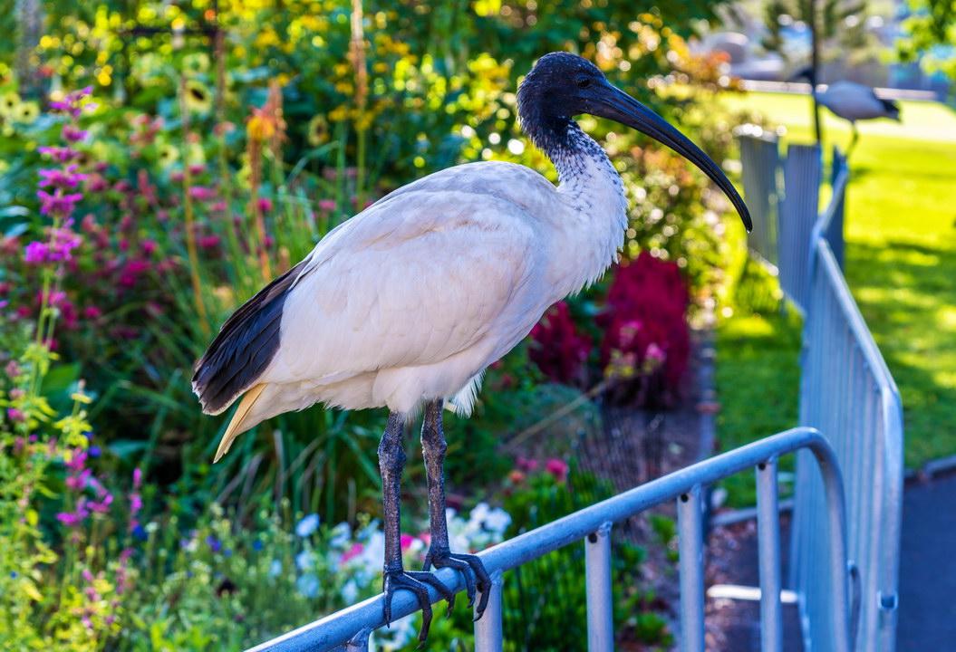 Птицы в Астралии