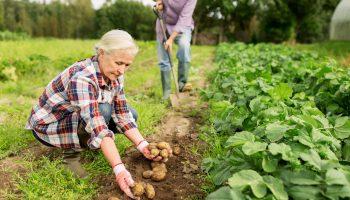 «Работаем, чтобы жить, но и живём, потому что работаем» — история семьи пенсионеров из Воронежской области