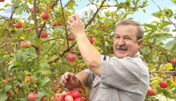 Набрал машину яблок в ближайшей заброшенной деревне — продал на рынке. «Бизнес? Нет, а 10тыс. в кармане»