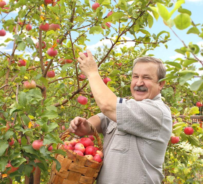 Набрал машину яблок в ближайшей заброшенной деревне - продал на рынке. «Бизнес? Нет, а 10тыс. в кармане»