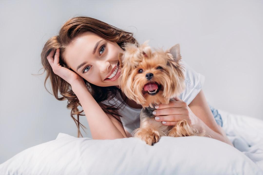 Можно ли заработать на разведении собак? Расскажу, как моя любовь к йоркам переросла в бизнес и какие тут водятся деньги